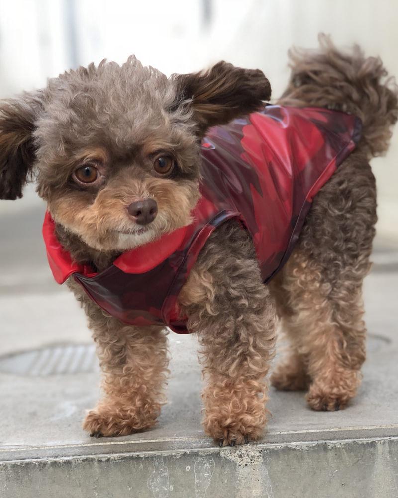 MONCLER(モンクレール) MONDOG 犬用ダウン3WAY レッド 在庫商品画像