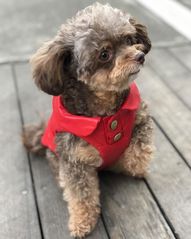 MONDOG 犬用ダウン2WAY レッド 在庫商品