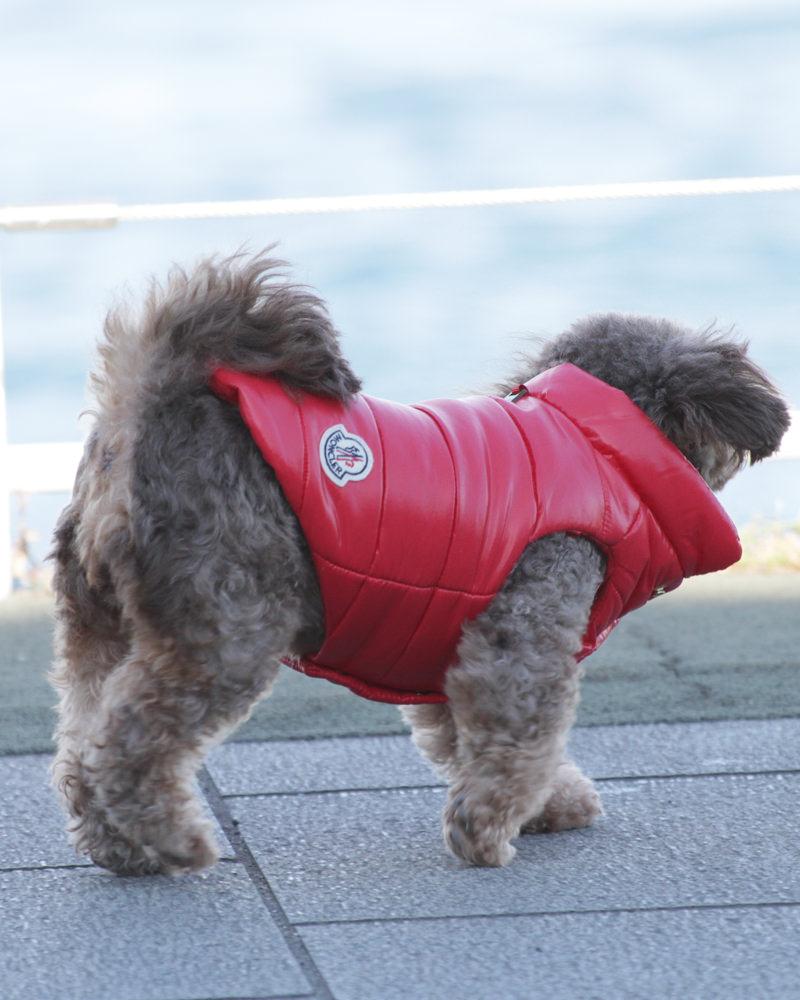 MONDOG 犬用ダウン 在庫商品 レッド